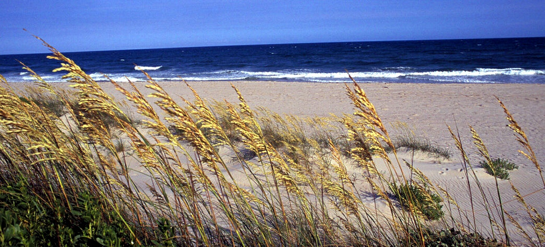 The wind gently blows the sea grass on the outer banks of North Carolina's beaches.